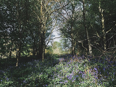 Inspiration: Bluebell Paintings